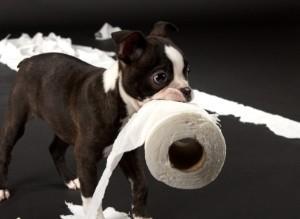chien papier toilette