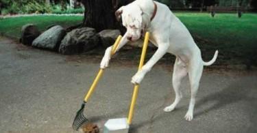 Enseigner la propreté à son chien
