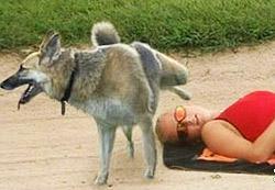 chien urine sur une personne allongée