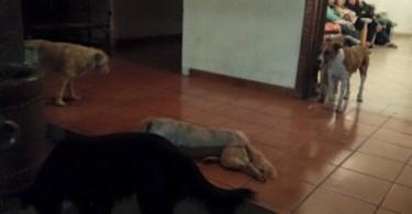 chiens assistent aux funerailles de margarita suarez 04