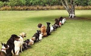 file d'attente de chiens pour uriner