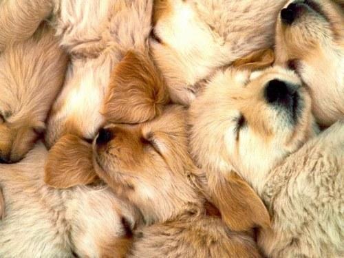 population canine importante en france