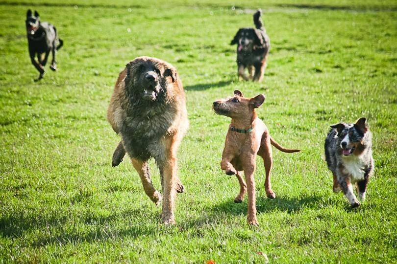 promenade du chien