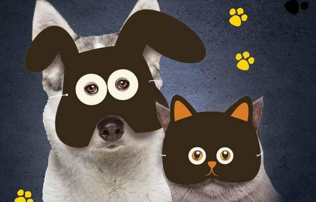 Cité des Sciences chiens&chats