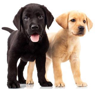 choisir un nom pour chien chaque ann e correspond une lettre. Black Bedroom Furniture Sets. Home Design Ideas
