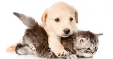 chien et chat qui cohabitent