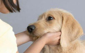girl-petting-dog_3232147b