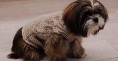 manteau-chien-en-laine-gris