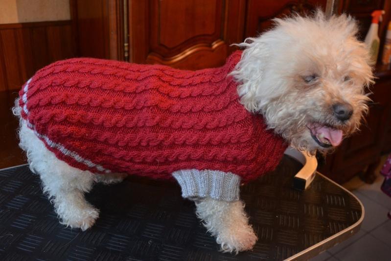 manteau-chien-en-laine-rouge