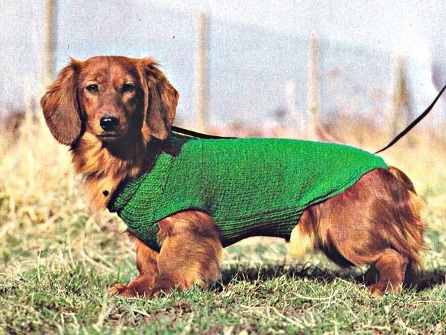 manteau-chien-en-laine-vert
