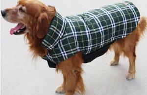 manteau-pour-chien-impermeable-vert-et-blanc