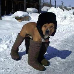 proteger-chien-hiver-froid-neige