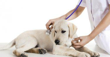 vacciner son chiot