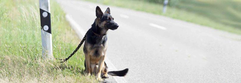 Que faire quand on trouve un chien abandonné ?