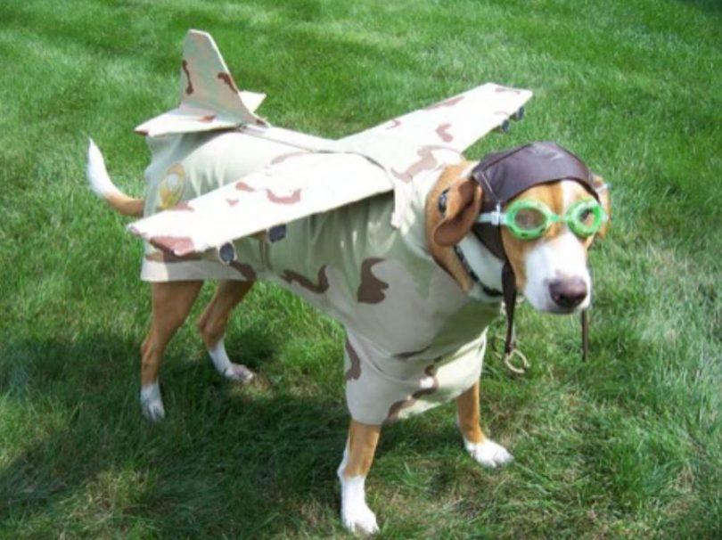 chien deguisement avion