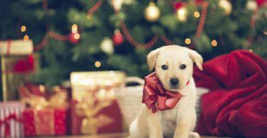 cadeau de Noël pour chien
