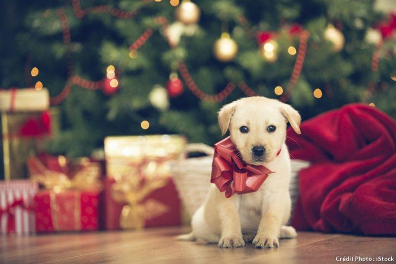 Cadeau de Noël pour chien : idées originales d'accessoires pour