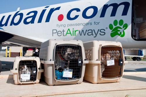 chiens en avion