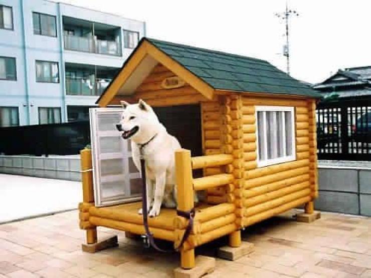 comment construire une niche pour chien conseils avis s. Black Bedroom Furniture Sets. Home Design Ideas