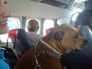 chien dans avion