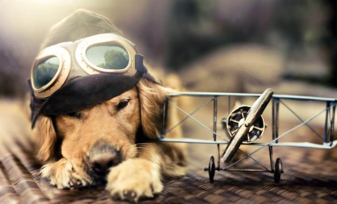 chien et avion
