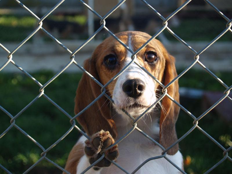 aider les chiens des refuges