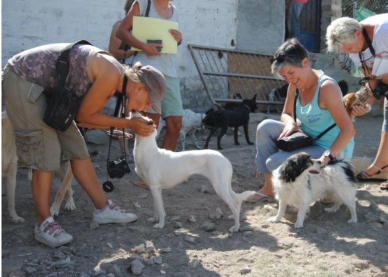 dons pour animaux en détresse