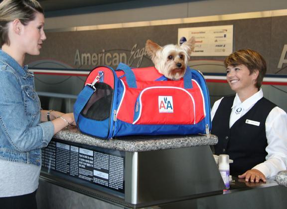 voyage du chien en avion