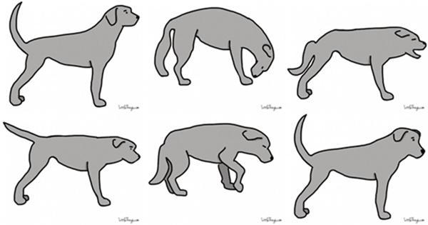 langage de la queue du chien
