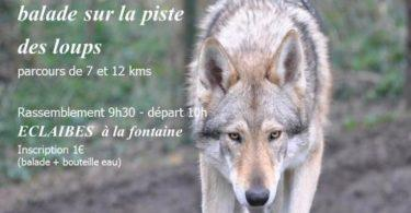 balade chiens loup eclaibes