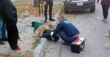 chien couché sur son maître