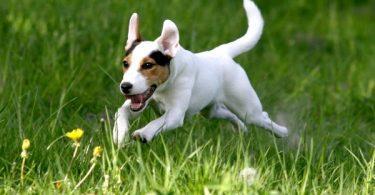 Comment savoir si son chien est en bonne santé ?