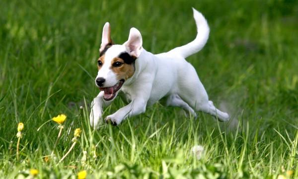 Comment savoir si son chien est en bonne santé ? Conseils