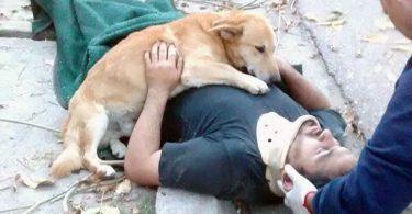 chien fidèle