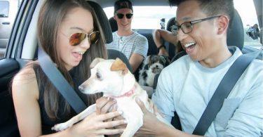 chiens dans la voiture de Jonathan chauffeur Uber