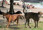 chiens malades et dangereux Ile Maurice