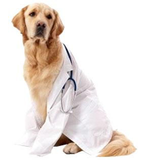 la santé du chien