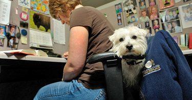 le chien au travail