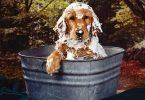 toilettage du chien