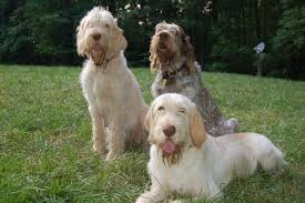 3 spinone