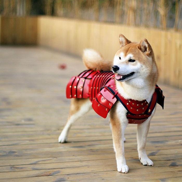 armure samourai pour chien
