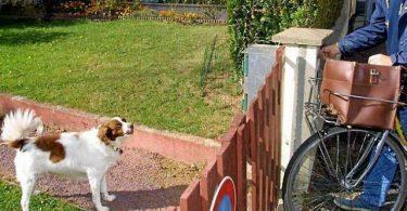 chien qui aboie sur le facteur