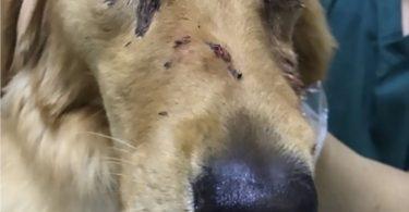 chien battu