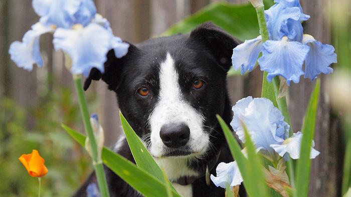 phytotérapie pour chien