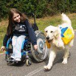 chien d'assistance pour personnes handicapées