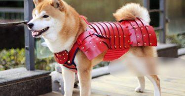 manteau pour chien samouraÏ