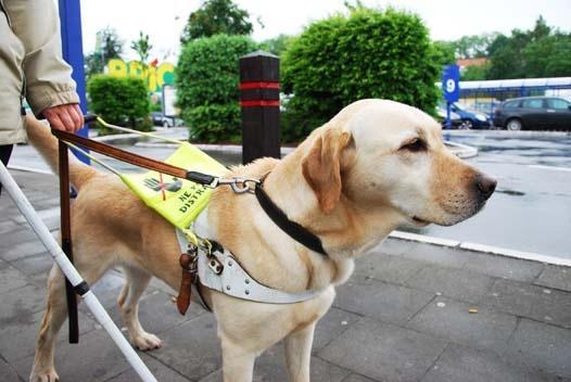 Le chien d'aveugles, en savoir plus - Blog Canin
