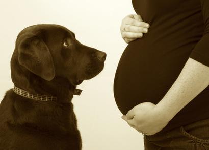 chien jaloux du bébé