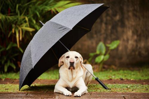 chien pendant l'orage