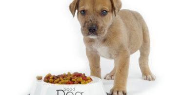 coût du chien pour son alimentation